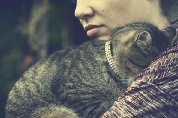 A la recherche d'un bon collier pour votre chat ? Faites un saut sur catapart.fr